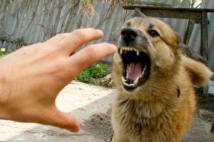 Школьники Саранска в опасности, на детей все чаще стали нападать дикие собаки