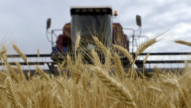 Турция ввела новые ограничения на поставку российской пшеницы