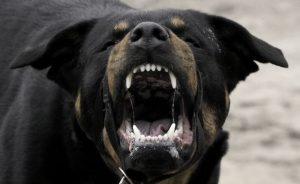 В Белгороде хозяин покусавшей ребенка собаки расстанется с четвертью миллионами рублей
