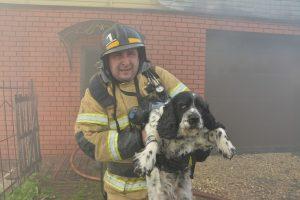 Под Саранском пожарные спасли спаниеля из горящего дома (ФОТО)