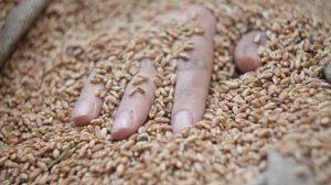 14-летний работник погиб на дне бункера с зерном