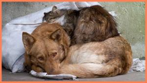 Как глава администрации Смоленской области издевалась над бездомным животным