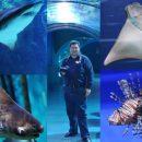 Москвариум: подводный мир на ВДНХ – РЕПОРТАЖ+ФОТО