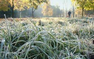 На Тюмень надвигаются заморозки