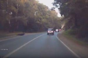 В Татарстане автомобиль «ВАЗ» сбил лося