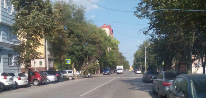 На пешеходный переход в центре Липецка упало дерево