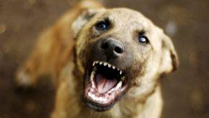 В Татарстане собака искусала лицо 8-летнего ребенка