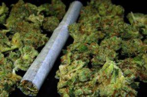 У сасовца изъяли почти 500 граммов марихуаны
