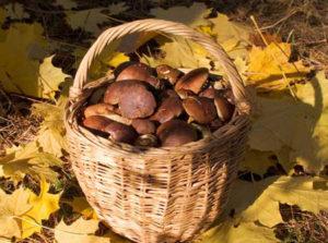 Обед с грибами стал последним для двоих жителей Новозыбково