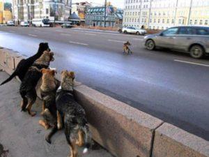 Под Смоленском водитель сбил собаку на глазах у ребенка и уехал