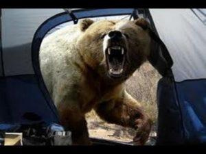 Под Смоленском на человека напал медведь
