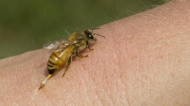 В Чувашии накануне от укуса пчелы умер мужчина