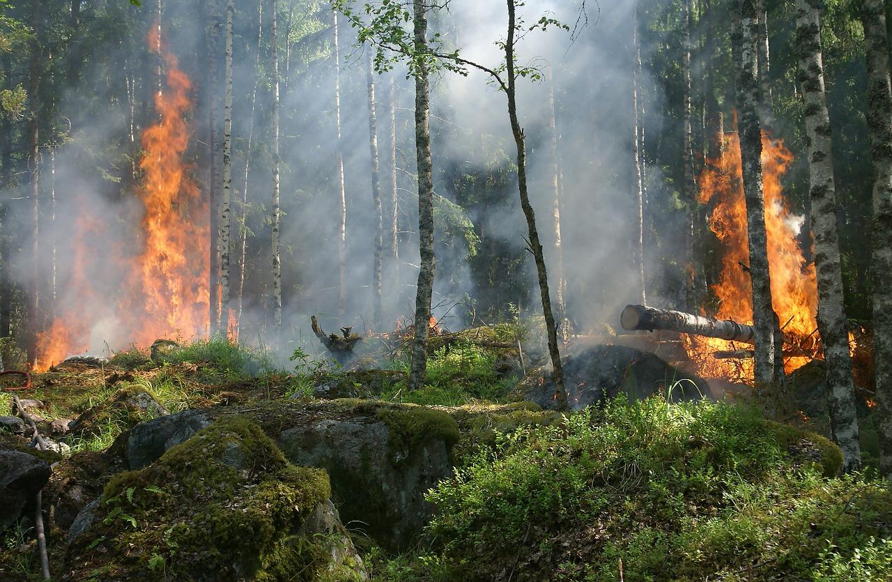 Лесной пожар на площади 0,5 га в Шиловском районе ликвидирован