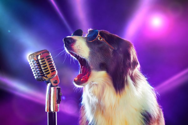 Перепевшая Бритни Спирс собака стала звездой соцсетей